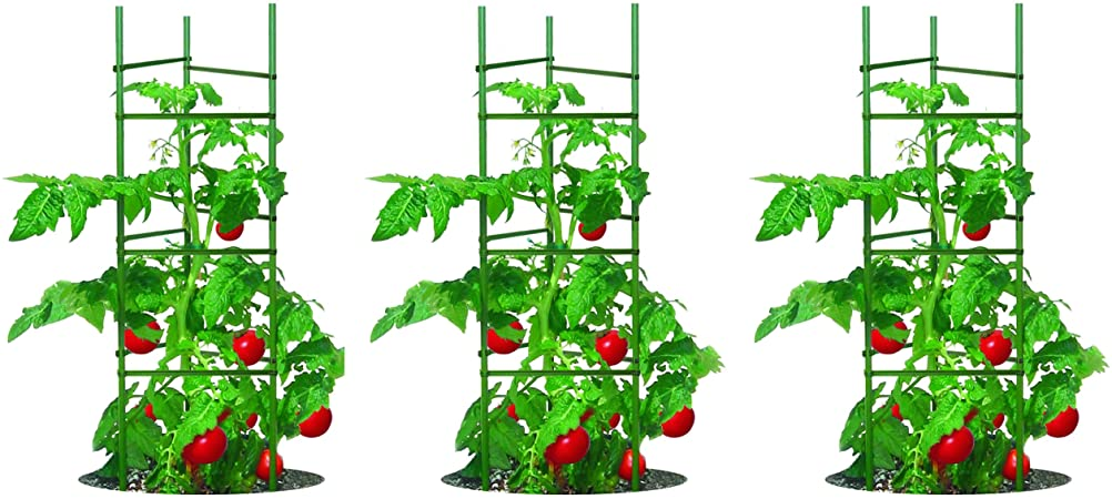 How Can I Grow Tomatoes At Home She Knows All